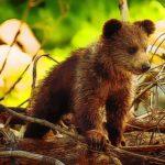 Cute Baby Bears