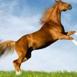 Horse Slide
