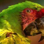 Parrot Bird Puzzle