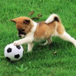 Playful Puppy Outdoor Puzzle