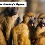 Three Monkey's Jigsaw