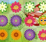 Flowers Rush